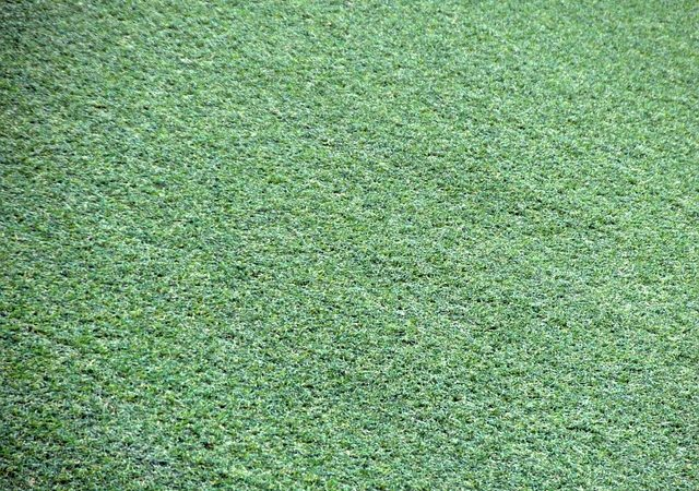 Synthetic grass and other outdoor accessories
